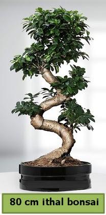 80 cm özel saksıda bonsai bitkisi  Trabzon çiçek siparişi vermek