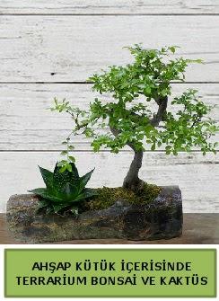 Ahşap kütük bonsai kaktüs teraryum  Trabzon çiçek servisi , çiçekçi adresleri